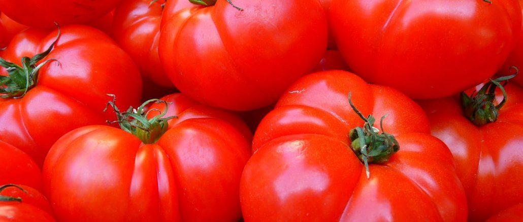 גידול עגבניות
